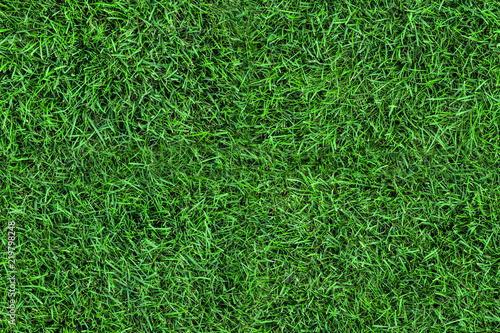 Foto auf Leinwand Gras Dark seamless green grass texture background. Fresh lawn field view frim above