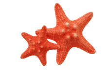 Two Red Starfish Isolated On White