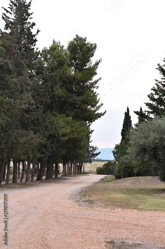 Fotografiet  Cypress and path, evergreen trees