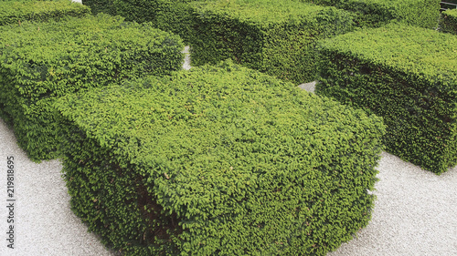Photo square designed hedge in the city of Berlin, Germany