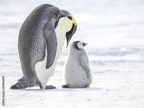 Foto op Canvas Antarctica Emperor Penguin with Chick