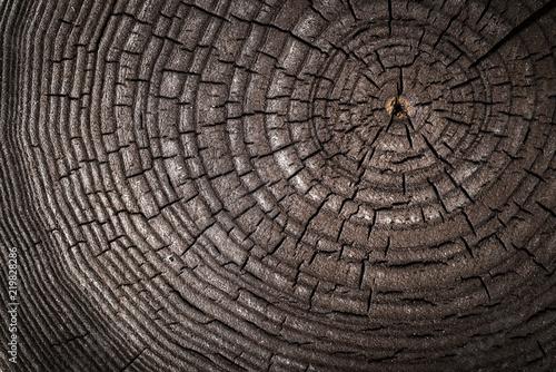 drewniana-stara-popiol-tekstura-rzniety-drzewny-bagaznik-zakonczenie-makro-strzal-jesion