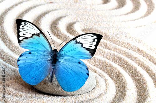 Foto op Plexiglas Stenen in het Zand Sand, blue butterfly and spa stone in zen garden