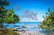 Bent trees along this Caribbean beach leaning towards the sea for their leaves to have more sunlight. Negril, Jamaica