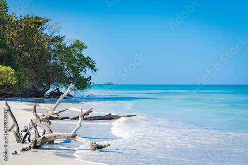 Driftwood and bent trees by the seashore on this beautiful white sand Caribbean electric blue beach in Negril, Jamaica Wallpaper Mural