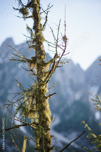 Tuinposter Olijfboom Tree in the Mountains