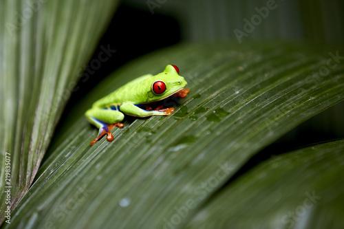 Beautiful frog sitting on leaf