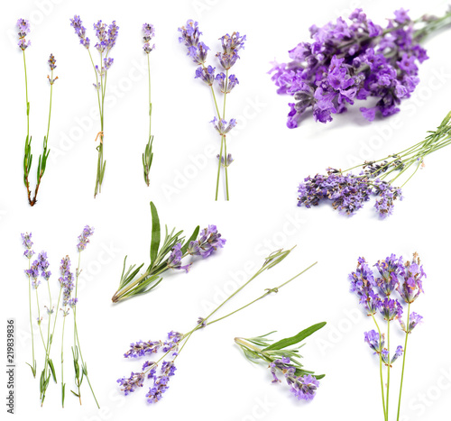 Photo  Set with aromatic fresh lavender on white background