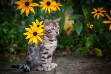 Bengal Kitten In Yellow Flowers