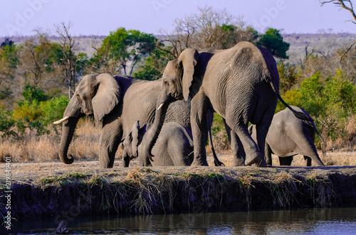 Photo  Elephant Watering Hole