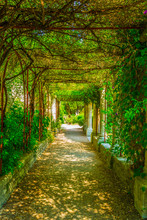 View Of A Garden Inside Of The Fort Saint Andre In Villenueve Les Avignon, France