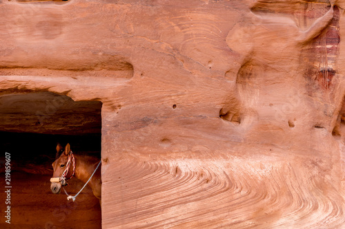 a donkey looking from carved door of ancient Nabataean homes in the desert Petra Valley, Jordan