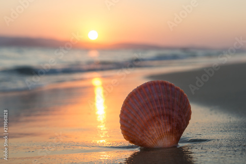 Tela Sea shell on the beach at sunset