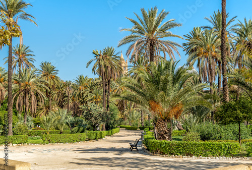 Villa Bonanno, the public garden with palms near Cathedral in center of Palermo, Sicily, Italy.
