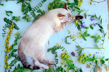 Top View Of A Laying Cat Among Green Plants