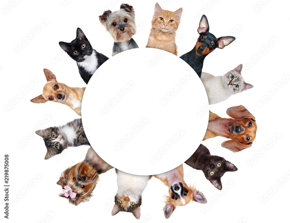 Round frame with a group of cats and dogs of different breeds