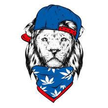A Beautiful Lion In A Cap And ...