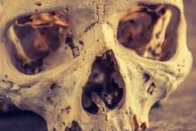 Human Skull - Darker