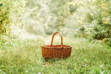 One Small Cute Empty Wicker Basket In The Middle Of Forest Park. Picking Autumn Fall Harvest Season. Concept Of Gathering Fruits And Vegetables At The End Of Summer. Sunlight From Above.