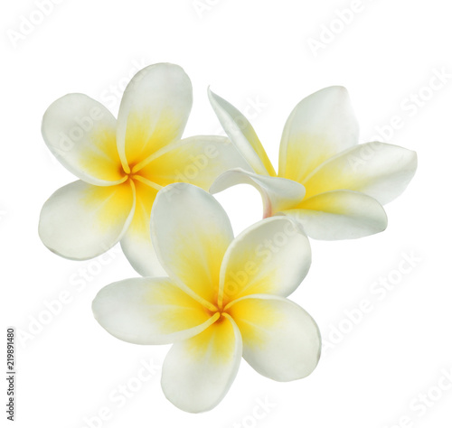 Photographie Frangipani flower on white background