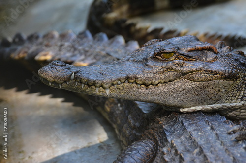 Tuinposter Krokodil Crocodiles from a crocodile park