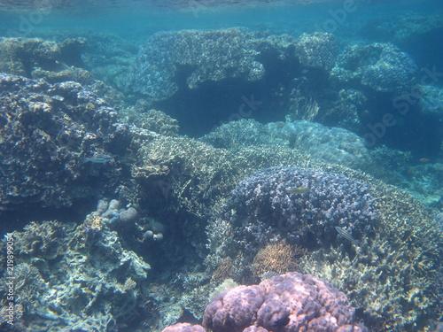 Staande foto Koraalriffen Under The Sea