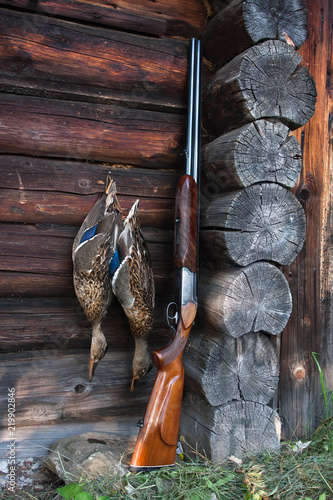two ducks and shotgun on the wooden wall