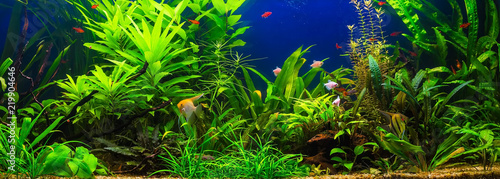 A green beautiful planted tropical freshwater aquarium with fishes Fotobehang