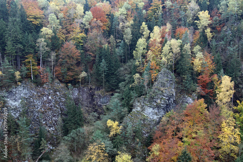 Photo  Rocks in autumn forest