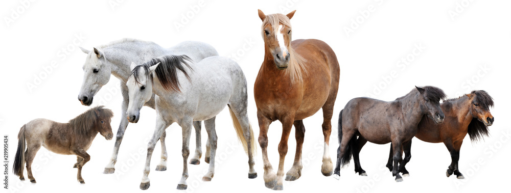 Fototapety, obrazy: horses and ponies