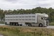 Moderner Viehtransporter auf dem Weg zum Schlachthof