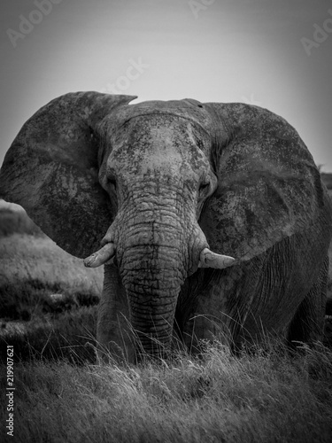 Photo sur Toile Elephant éléphant d'Afrique - Namibie