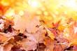 canvas print picture - autumn leaf