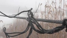 Reeds Dry And Rope On Winter R...