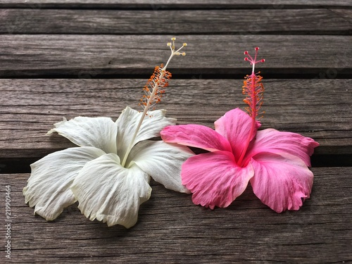 Pink And White Hibiscus Flower Be Together On Wooden Bridge Buy