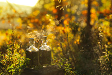 Herbal Green Tincture In The Autumn Forest.natural Tincture Of Medicinal Herbs In A Square Glass Bottle On A Stump In An Autumn Forest In Bright Sunlight.magic Potion.Homeopathy