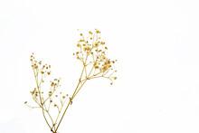 Flower Of Grass On White Background