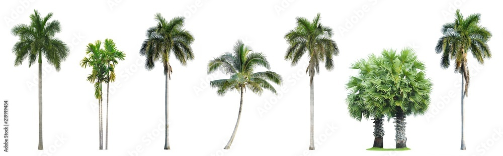 Fototapety, obrazy: Collection of Palm trees isolated on white background