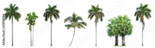Deurstickers Palm boom Collection of Palm trees isolated on white background