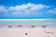 Seagulls stand on the edge of the sea on the beach of Varadero, Cuba
