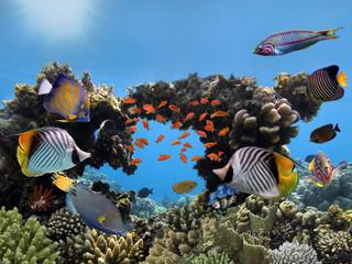 Fototapeta Hard Coral with fish