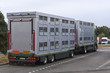 Moderner Viehtransporter mit Anhänger auf einem Autobahnparkplatz