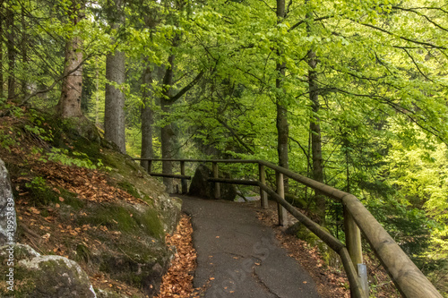 Foto op Plexiglas Weg in bos Triberg, Germany