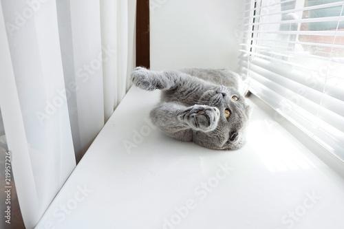 Fotografie, Obraz  Playful gray cat on the window
