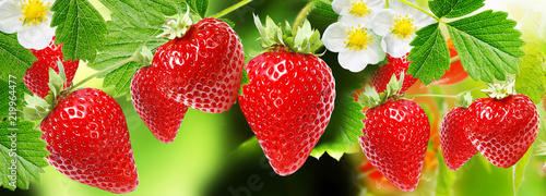 Poster Fruit ripe fresh garden strawberries