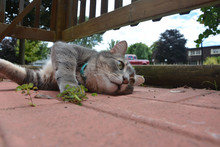 Grey Tabby Cat Lounging On A Patio