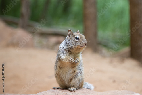 Printed kitchen splashbacks Squirrel Squirrel