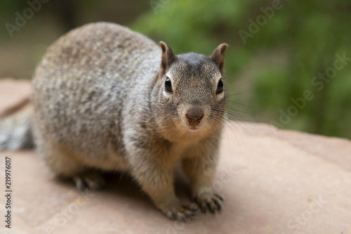Recess Fitting Squirrel Squirrel