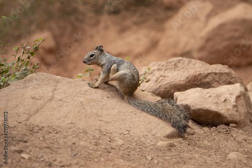 Foto auf Gartenposter Eichhornchen Squirrel
