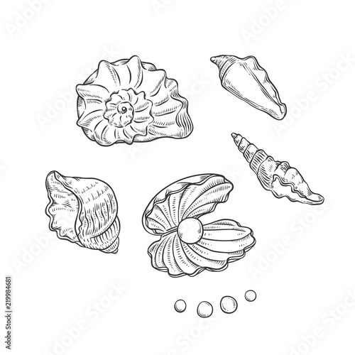 Fotografie, Tablou Vector set sea shells and pearls different shapes